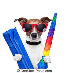 holidays, собака, лето