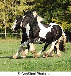 horses, бег, два, пастьба
