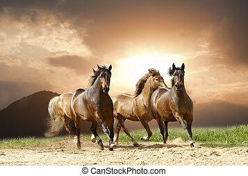 horses, бег