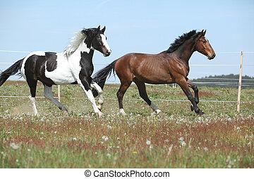 horses, весна, два, удивительно, бег, пастьба