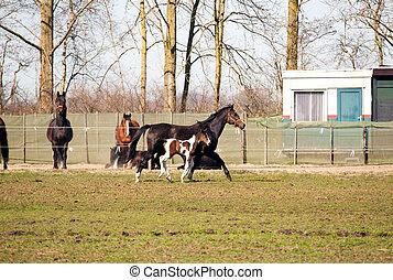 horses, выгон, бег