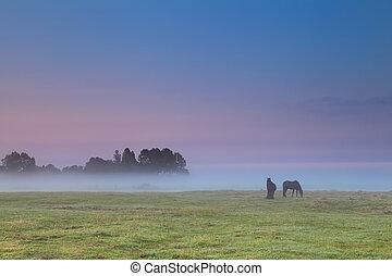 horses, выгон, восход