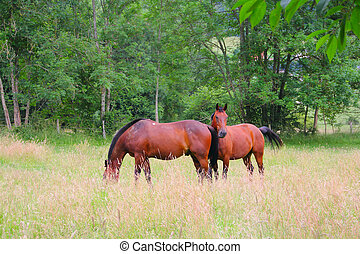 horses, выгон, два