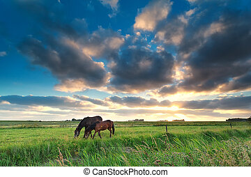 horses, выгон, закат солнца, grazing