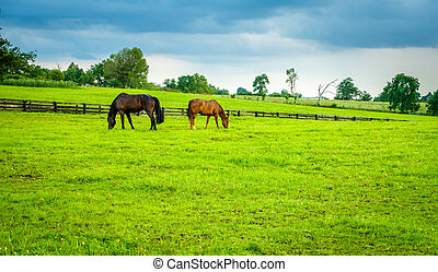 horses, выгон, кентукки