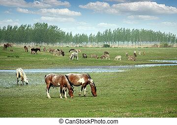 horses, выгон, пейзаж