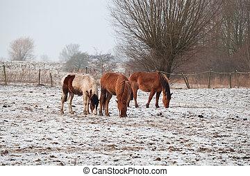 horses, выгон, снежно