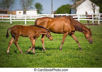 horses, выгон