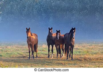 horses, выгон, туманный