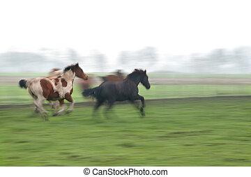 horses, выгон, galloping, размытый