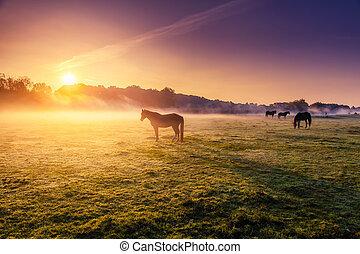horses, выгон, grazing