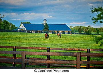 horses, два, поле, grazing, чистокровный
