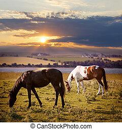 horses, закат солнца, grazing