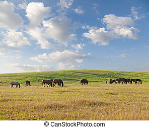 horses, лето, день, выгон