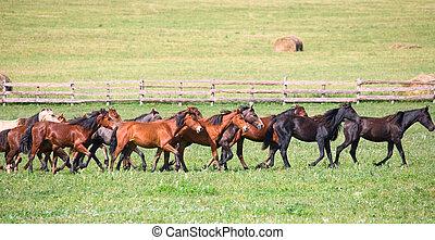 horses, молодой, пасти