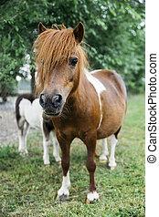 horses, пони, ферма