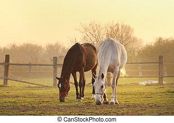 horses, ранчо, два