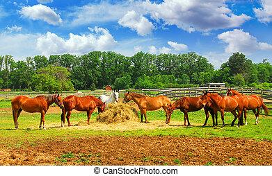 horses, ранчо