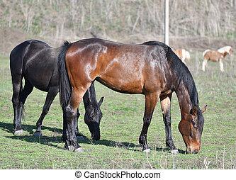 horses, ферма