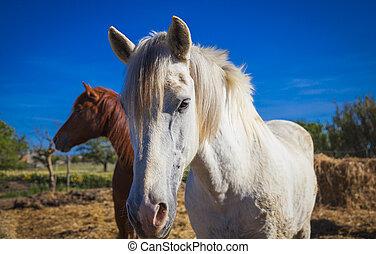 horses, mallorca, выгон