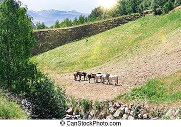 horses, pasture.