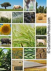 husbandry., сельское хозяйство, животное
