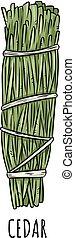 illustration., пачка, кедр, трава, придерживаться, болван, шалфей, hand-drawn, isolated, мазаться