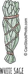 illustration., пачка, трава, придерживаться, болван, шалфей, hand-drawn, isolated, белый, мазаться