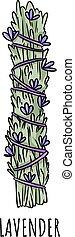 illustration., пачка, трава, придерживаться, болван, шалфей, hand-drawn, isolated, лаванда, мазаться