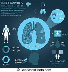 infocharts, lungs