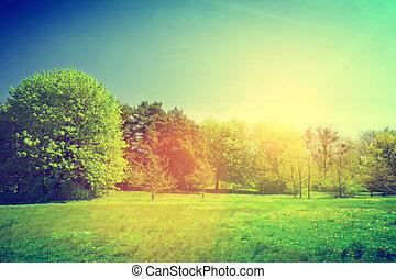 landscape., лето, солнечно, зеленый, марочный