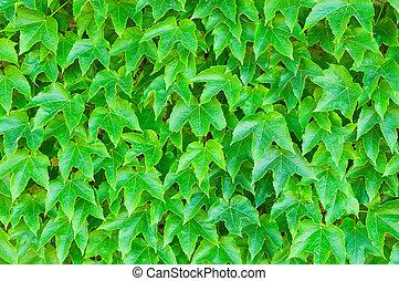 leaves, зеленый, задний план