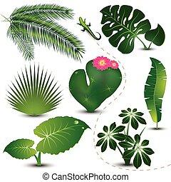 leaves, коллекция, тропический