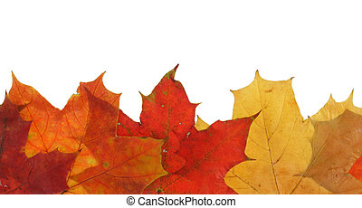 leaves, линия, кленовый