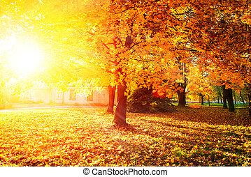 leaves, осенний, trees, осень, fall., park.