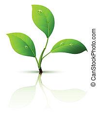 leaves, филиал, росток, зеленый