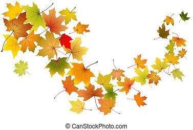 leaves, falling, кленовый