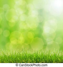 lights, bokeh, трава, зеленый
