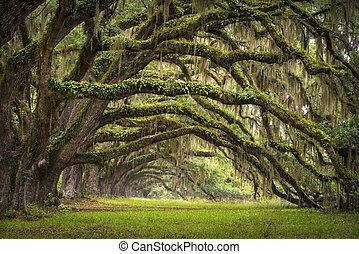 lowcountry, туз, пейзаж, дуб, trees, плантация, жить, лес, южная каролина, чарльстон, oaks, проспект, бассейн, южная каролина