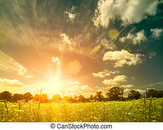 meadow., лето, натуральный, красота, над, backgrounds, яркий, закат солнца, дикий, ромашка, цветы