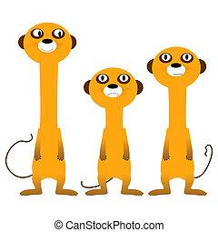 meerkats, любопытный