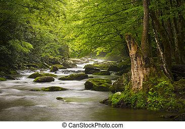 mountains, великий, relaxing, природа, дымчатый, парк, gatlinburg, теннесси, мирное, туманный, tremont, река, национальный, пейзаж, scenics