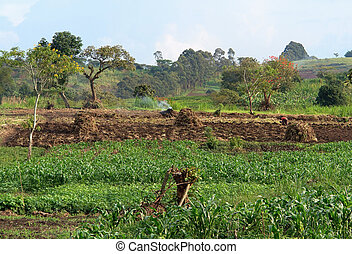 mountains, сельское хозяйство, rwenzori