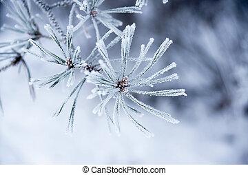 needles, зима