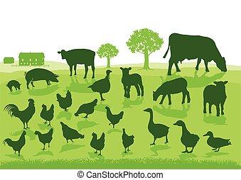 organische, landwirtschaft