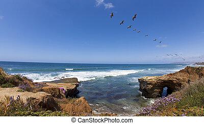 pelicans, cliffs, закат солнца