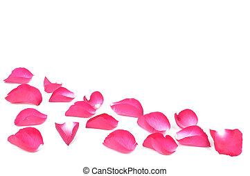 petals, роза, розовый