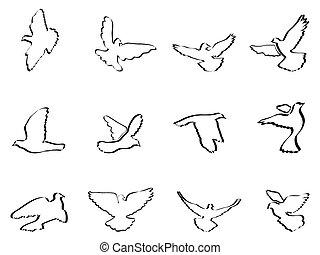 pigeons, doves, форма