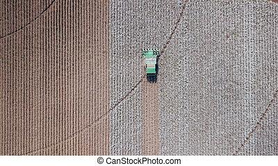plant., уборка урожая, сельское хозяйство, combine., хлопок, field.