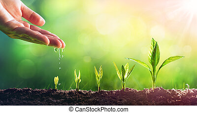plants, выращивание, полив, молодой, рука